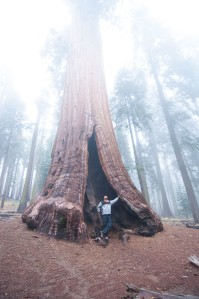 On the way to Tharp's Log we saw this amazing tree almost covered in fog!